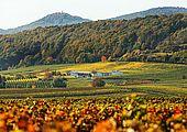 Unser Weingut mitten in den Weinbergen